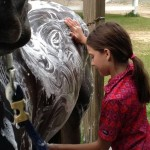 Bathing a horse