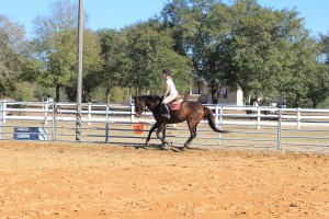 Jersey during a hunter lesson