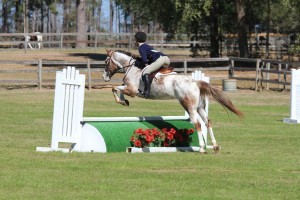 Freckles competing in Mini Medal Equitation