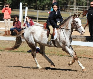 Freckles loves taking beginner riders to horse shows!