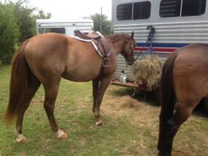 Horse Show in Baker, FL
