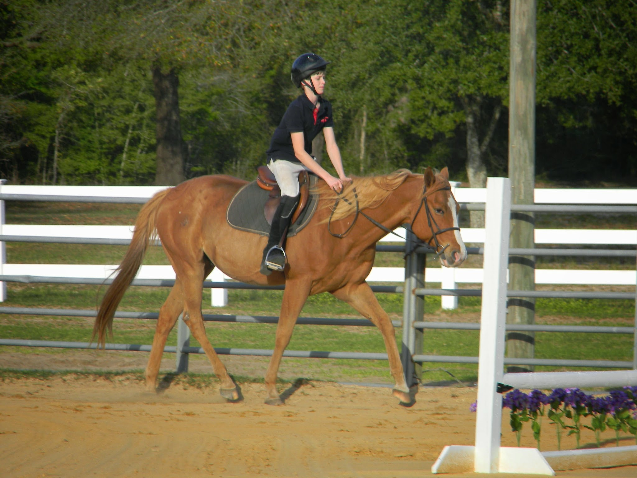 Beginner riders at CV Equestrian love riding Bullseye because he takes such great care of them.