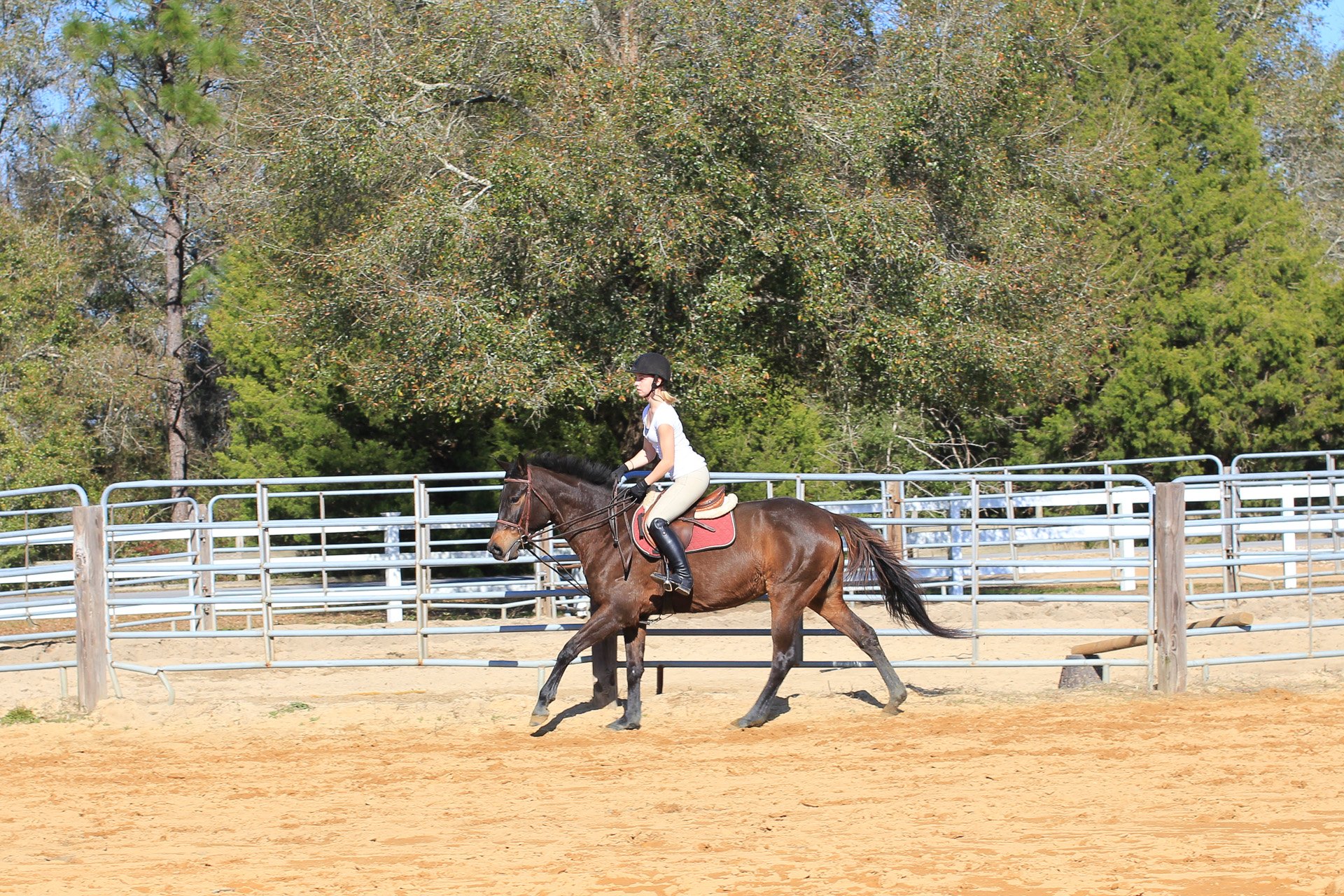 Horseback Riding Lesson At Cv Equestrian In Chipley Fl Horse Lessons And Panama City Beach Area
