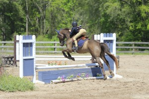 Welsh Pony, Cash, jumping in the puddle jumper class at Cavallo Farms.