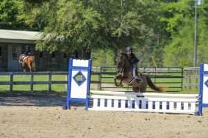 Another blue ribbon hunter round for Portia aboard CV Equestrian's own Cash for Gold, a flashy large Welsh pony.