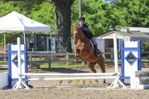 Thoroughbreds are well known for their excellent stamina and jumping ability.