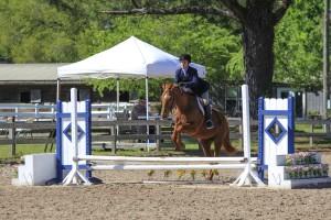 cavallo-march-2015-35