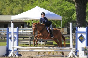 """Apricot Glow ridden by CV Equestrian riding student Anna Kay Bass showing in the 2'3"""" Hunter division at Cavallo Farms."""